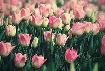 Flowers / by Lori Ferguson