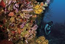 Underwater in the BVIs