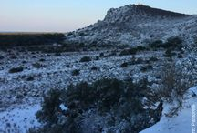 Neve al Parco della Maremma 26/02/2018 / Ecco alcune immagini del Parco della Maremma la mattina del 26 febbraio 2018. Tutte le immagini in questa bacheca sono di Alberto Pastorelli.
