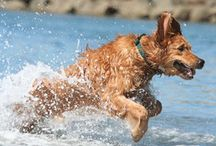 Pets at the Beach / Who wouldn't want to vacation with Man's best friend? check out this collections of fluffy and furry friends vacationing in style!
