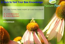Quiz Time / Testing your knowledge about food and bees?