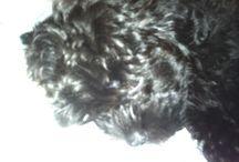 My puppy / My puppy