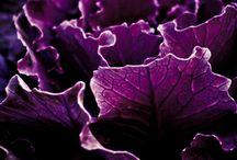 inspiration vegetables