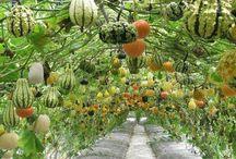 For a garden