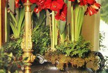 julens blommor  christmas flowers