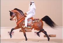 Model Horse Performance & Scenes