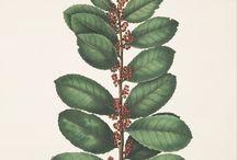 Maté vert / Le maté vert bio est une boisson traditionnelle d'Amérique du Sud. Il se consomme comme le café ou le thé. Retrouvez le maté bio sur l'e-shop Tisanes Le Dauphin.