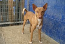 Buscan hogar. Looking for a home / Dogs at shelter in Seville