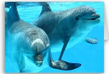 Dolphin / Lovely dolphins! They are the animal which I love!
