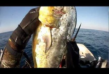 Spearfishing by SpearoBlog.com