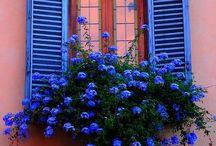 Window-wonder