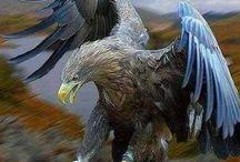 Falcon...