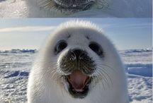 Cute Animals *Q*