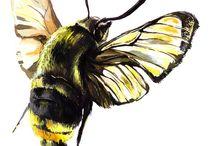 mouchy, včely a jiná havěť