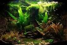 Biotopaquarium