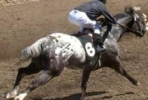 Appaloosa Racing / by Appaloosa Museum & Heritage Center