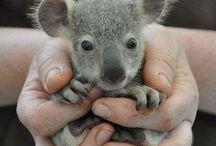Australian Outback / by Ashley Michelle