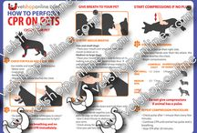 How to Perform CPR on Pets / by VetShopMax.Com