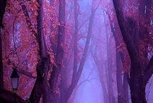 /Nature/