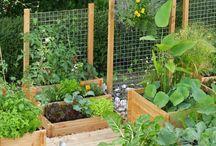 ogród łapka
