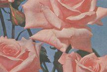 floral / we hurt we burn we bloom