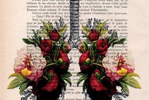 Anatomy, Physiotherapy, Kinesiology
