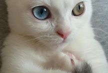 Gatitos / Gatos hermosos!!!