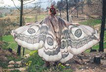 wings faire