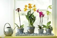 MINIatures... / topiary...terrariums... bonsai... fairy gardens... orchids... spring bulbs... succulents... / by Pixel Musings