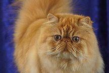 CATS  / Eva'ma