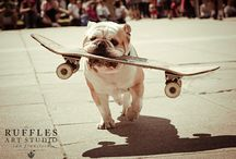 dog on sk8