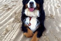 Bernese MD