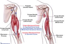 anatomical functions