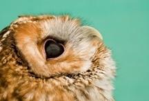 Owls / I think owls are a hoooooooot! / by Annie McDannald