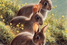 rabbit usagi lapin
