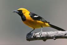 my backyard bird visitors / by Erika Conner