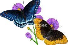 Butterflies  ღஐƸ̵̡Ӝ̵̨̄Ʒஐღ  Dragonflies / Butterflies and such ღஐƸ̵̡Ӝ̵̨̄Ʒஐღ    Ƹ̴Ӂ̴Ʒ / by Gilda E (Gigi) ✿ڿڰۣ(̆̃̃ღڿڰۣ