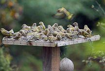 Fuglebrett - Fuglematere - Fuglehus / Fuglemat og sånn