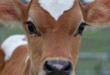 Farm life / by Donna 'Wolf' Raymond