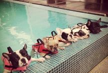 FRENCHIES!! / by Melissa Retzsch