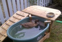 Pools for the ducks