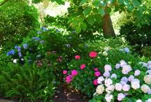 Great Flower Gardens / by Alva Hay