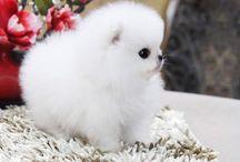 Cute little animals