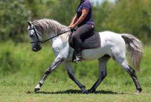 Pretty Horses