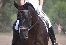 Horses / Everything equestrian!