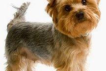 rady pre psíkov