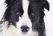 Border Collies / The cutest Border Collie dogs within the Feature My Pet community, and elegant Border Collie themed jewelry.
