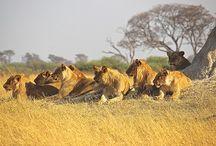 Places to Vist- Masai Mara, Kenya