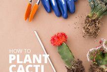 .suuculent.cactus.terrarium.oryx. / instagram: oryx_design_terrariums