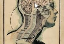 Anatomical Art / by Heidi Richardson Evans
